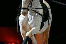 horse,independent spirit,spontaneous