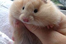 Hamsterzíneo