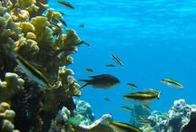 Guana Cay, Abacos Bahamas