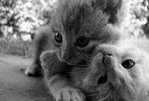Cosas Kawaiis :3 / (Animales,personas,objetos...) que me parecen cuquis y adorables.