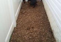 Animal Care / Dog Training and Care
