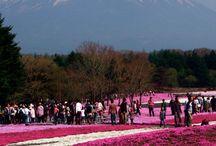 JAPAN / Travelling Japan