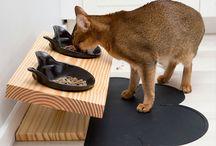 Kiva ruoka astia kissalle