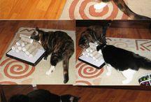 cat / by Becky Warren