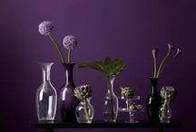 basics paars / purple