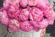 Flores que enamoran❤️