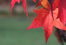 My autumn pics