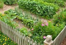 Ogródek do schrupania