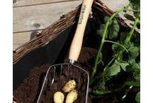 GROW | Edible garden / Growing your own foods