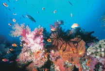 Underwater Fiji / The spectacular marine life in Fiji