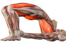 Yoga antomy