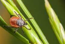 Pests & Pets / Learn how to keep your pets safe from pests such as fleas and ticks!