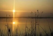 Laguna de Pitillas / La Laguna de Pitillas, con sus 206 hectáreas, es el humedal de tipo estepario y origen endorreico más extenso de los existentes en Navarra y uno de los más importantes del Valle del Ebro. Destaca por la abundancia y diversidad de especies de aves acuáticas que eligen esta laguna para pasar el invierno o para reproducirse. Es a su vez un lugar estratégico para el reposo y alimentación de numerosas aves que realizan la migración a través de la ruta pirenaica occidental.  / by Hotel Hola Tafalla