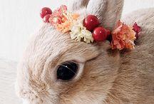 słodkie króliki / są tu  słodziutkie najsłodsze króliki  świata