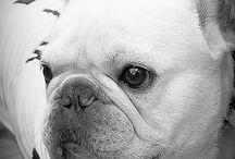 ワンコショット / 麻布 松尾寫眞舘 「あざぶじゅうワン」  麻布十番公式サイト 「うちの子フォト」