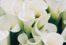Bouquets & Boutonnieres / by Jennifer Hansen Wedding & Event Boards