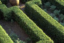 sövény, hedge / sövény, hedge