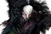 Birds / by Marija Jankovic