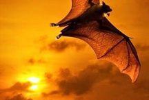 Morcego e animais noturno