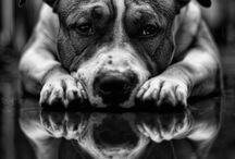 Badass Dogs