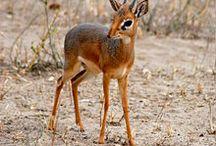 S.A. Wildlife