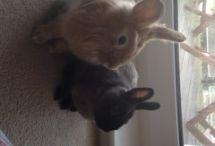 Cute Rabbits / Cute rabbit pictures