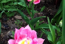 Flowers / Some nice flowers from around the Woolly World / by Woolly Green