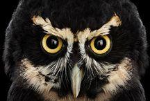 OWLS / love it