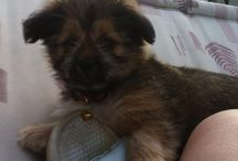 Chester Chewbacca! / My new Little Puppy Chester Chewbacca.