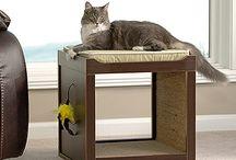 Cat / Diy Ideals