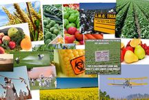 Gentechnik, Monsanto & Co.