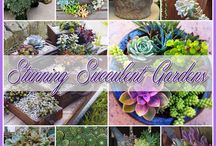 SUCCULENTS / by inspirations from nature