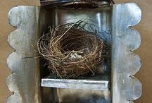 Nests and Birds