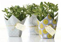envoltorio regalo plantas
