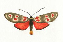 art - motýli