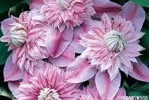 My favorite flowers / by Brigit Steinbrenner