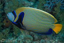 Marine Animals Photographies
