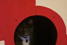 Cat Fun / by Keli Wojciechowski