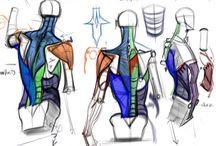 美術解剖学 / 参考になりそうなやーつ