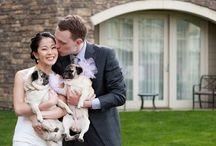 wedding pugs
