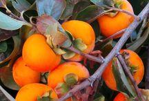 Frukt o nöt