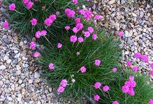 gravel garden plants