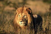 African Safari Adventures - A Walk on the Wild Side!
