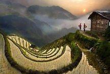 Paesaggi terrazzati