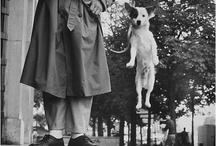 dogs/cats/llamas oh my! / by Lynn C