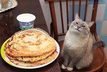 Коты / Куда ж без них