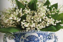 Tavaszi virágok / Korai virágok, Tavasz