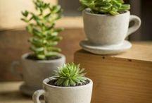 J'♥ les plantes