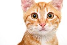 Animals / http://bigideamastermind.com/bimsys/home/gonduzo