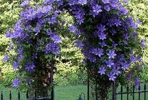 grădini